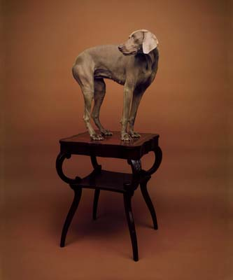 William Wegman, Weimaraner 1 - Galerie Stephen Hoffman - Muenchen