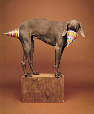 William Wegman, Weimaraner 14 - Galerie Stephen Hoffman - Muenchen