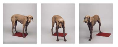 William Wegman, Weimaraner 15 - Galerie Stephen Hoffman - Muenchen