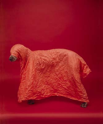 William Wegman, Weimaraner 16 - Galerie Stephen Hoffman - Muenchen