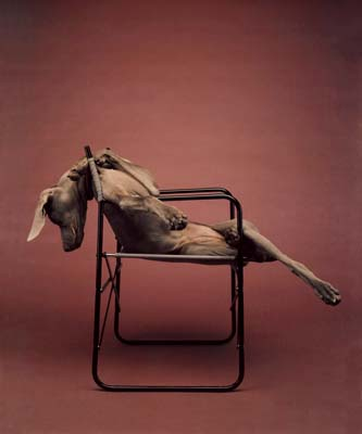 William Wegman, Weimaraner 17 - Galerie Stephen Hoffman - Muenchen