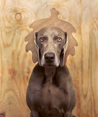 William Wegman, Weimaraner 20 - Galerie Stephen Hoffman - Muenchen