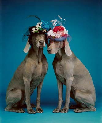 William Wegman, Weimaraner 23 - Galerie Stephen Hoffman - Muenchen