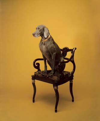 William Wegman, Weimaraner 26- Galerie Stephen Hoffman - Muenchen
