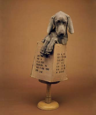 William Wegman, Weimaraner 27- Galerie Stephen Hoffman - Muenchen