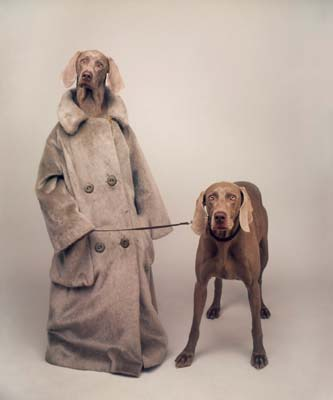 William Wegman, Weimaraner 29 - Galerie Stephen Hoffman - Muenchen
