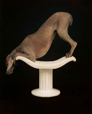 William Wegman, Weimaraner 31 - Galerie Stephen Hoffman - Muenchen