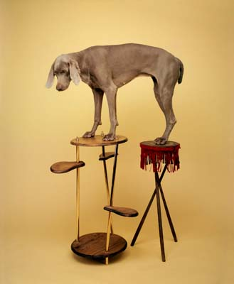 William Wegman, Weimaraner- Galerie Stephen Hoffman - Muenchen