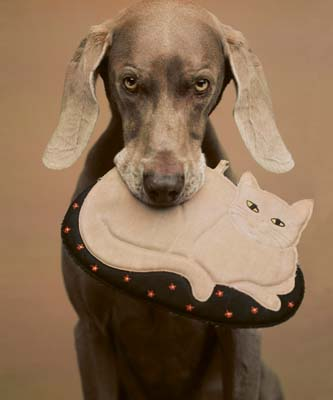 William Wegman, Weimaraner 5 - Galerie Stephen Hoffman - Muenchen