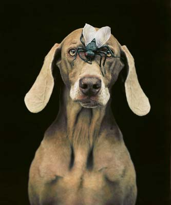 William Wegman, Weimaraner 6 - Galerie Stephen Hoffman - Muenchen