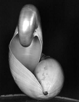 Shell,1927