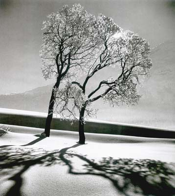 Trees in snow, St