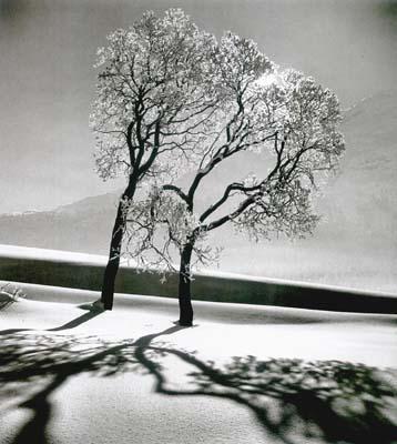 Alfred Eisenstaedt (1898-1995), Trees in Snow, St. Moritz, Galerie Stephen Hoffman