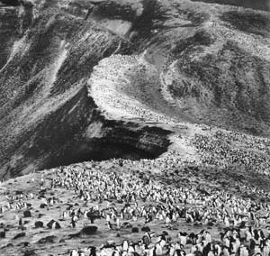 Salgado_Deception-Island_2005