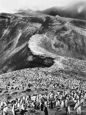 Sebastião Salgado, Zügelpinguine, Pinguinkolonie am Bailey Heard, Deception Island, 2005, Galerie Stephen Hoffman, München