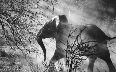 salgado-elephant