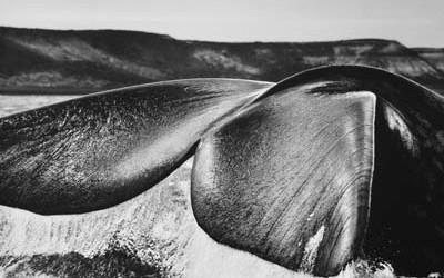 salgado-whale