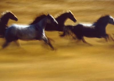 Ernst Haas: Free Spirits