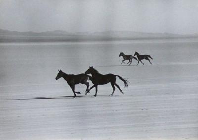 Haas - Misfits Horses 10