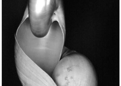 Edward Weston, Shel - Galerie Stephen Hoffman - Munich
