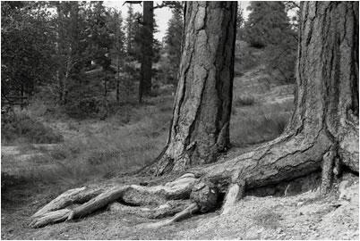 Jan-Oliver Wenzel, Giant Feet, Bryce Canyon, Utah, 2009