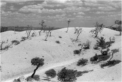 Jan-Oliver Wenzel, Sand, Pines and Clouds, Bryce Canyon, Utah, 2009