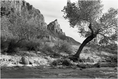 Jan-Oliver Wenzel, At the Virgin River, Zion National Park, Utah, 2009
