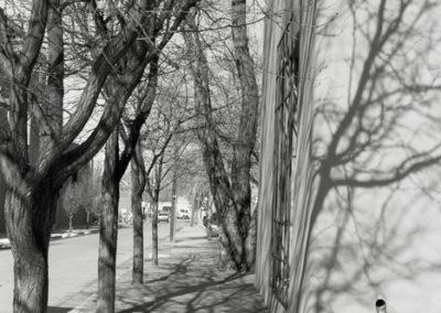 Jan-Oliver Wenzel, Sante Fe Road and Trees, 2010
