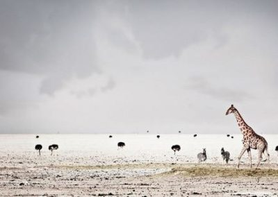 20 Klaus Tiedge - Galerie Stephen Hoffman